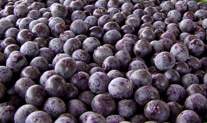 acai berry weight loss