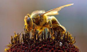 tea an honey combination